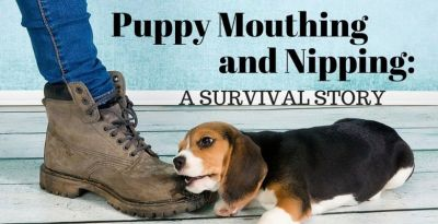 Puppy Mouthing and Nipping: A Survival Story