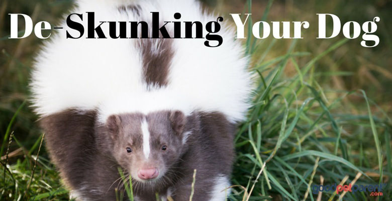 GoodPetParent feature image - de-skunking your dog