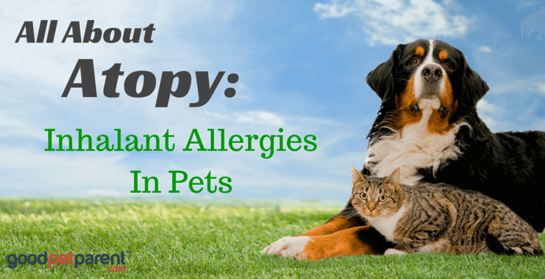 All About Atopy Feature Image - Good Pet Parent