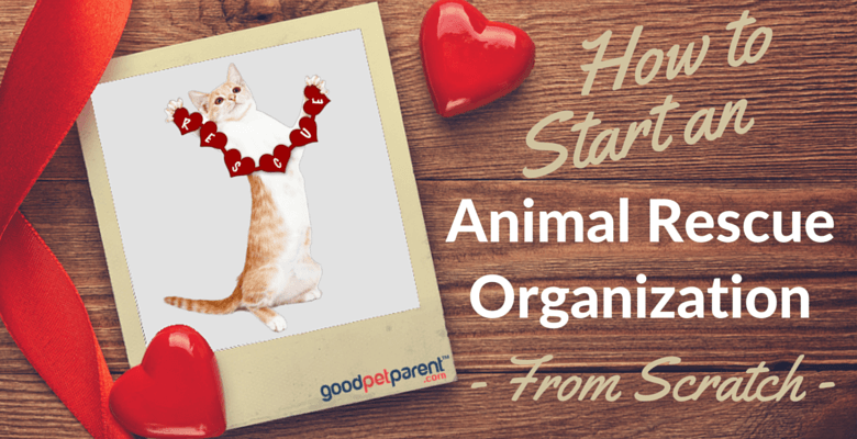 How To Start An Animal Rescue Organization feature image