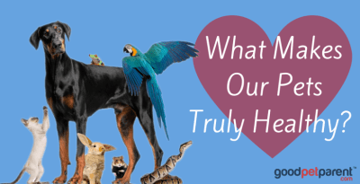Pet Health - What Makes Our Pets Truly Healthy?