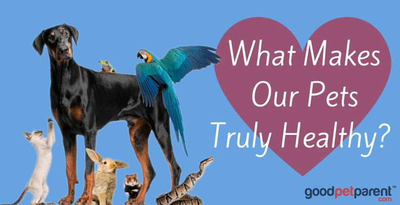 What Makes Our Pets Truly Healthy Feature Image