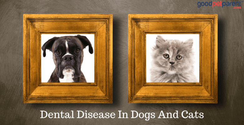 Dental Disease In Dogs And Cats Feature Image