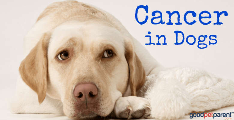 Cancer in Dogs Feature Image