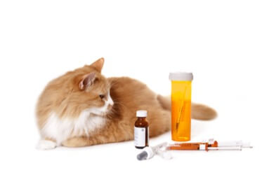 cat and medication for arthritis