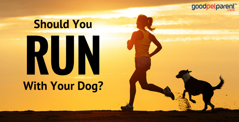 Should you run with your dog feature image