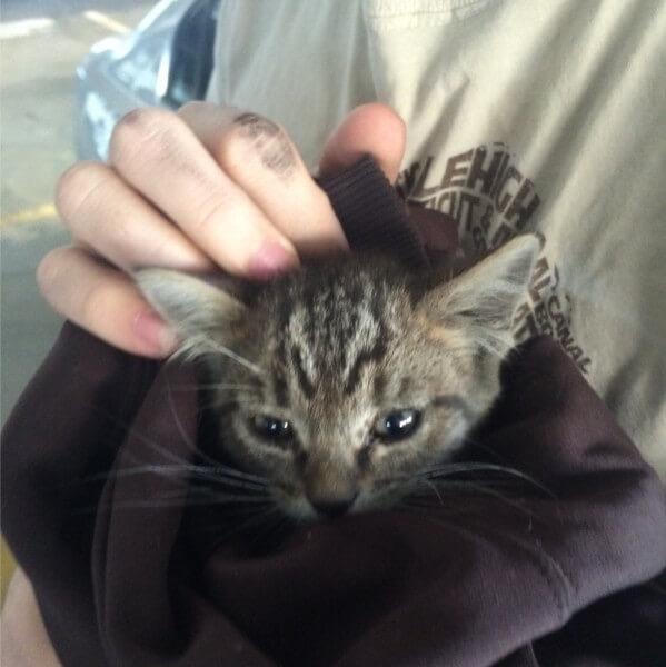 takes-village-rescue-kitten-1