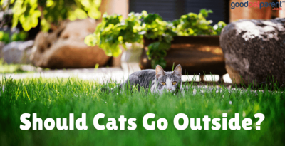 Should Cats Go Outside?
