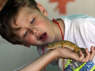 boy with gecko