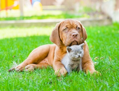 Vaccinations: Too Much Of A Good Thing? - Good Pet Parent
