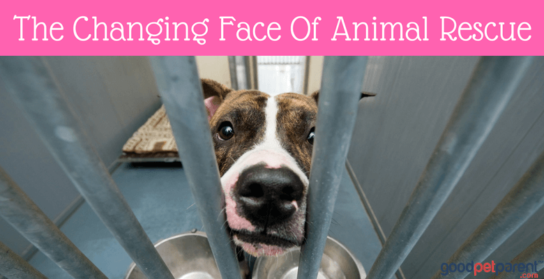 the-changing-face-of-animal-rescue-feature-image