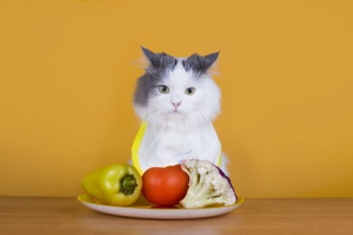 Cat with vegetables