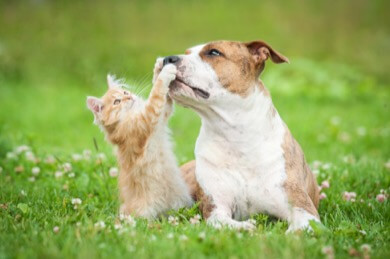 Dog and Kitten introduction