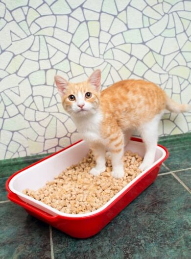 cat in low- or no-dust litter box reduce feline asthma
