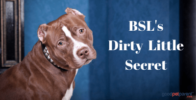 Breed-specific Legislation's Dirty Little Secret Feature Image