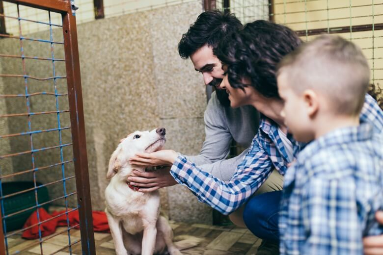 Family visiting with dog in a shelter kennel.