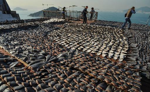 """Le gouvernement de Hong Kong a annoncé vendredi qu'il ne servirait plus d'ailerons de requin et de thon rouge aux réceptions officielles, souhaitant donner """"le bon exemple"""" pour lutter contre l'extermination des espèces menacées. © AFP/Archives Antony Dickson"""