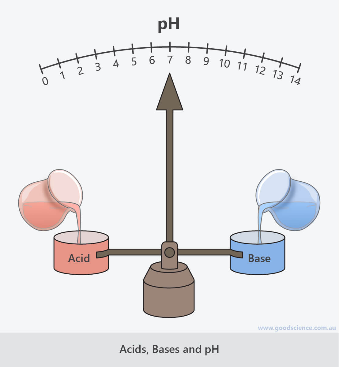 Acids Bases And Ph