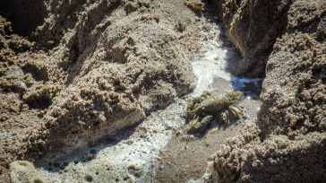 Crayfish in the lake