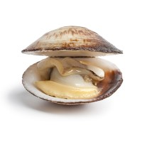 Healthy Protein Foods - clams