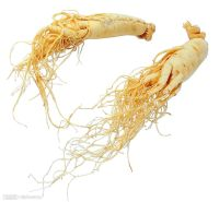 Natural Ways To Increase Testosterone - Ginseng