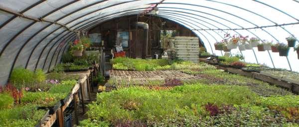 simpler thyme organic farm