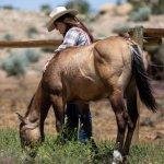 Internship On A Working Wyoming Ranch Go Overseas