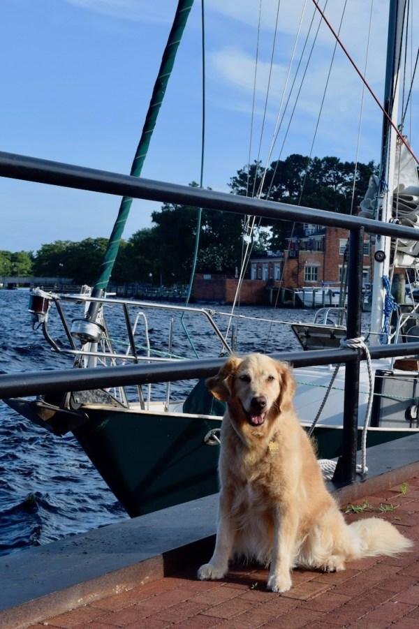 Honey the boat dog on the Elizabeth City docks with Meander.