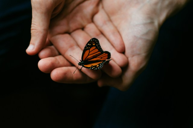 Butterfly in two hands