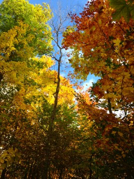 Fall colours in our forest camping area at Gordon's Park on Manitoulin Island