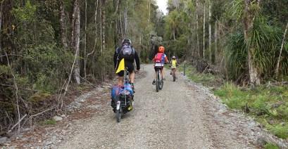 Forest trail Kumara Westcoast Wilderness Trail goRide
