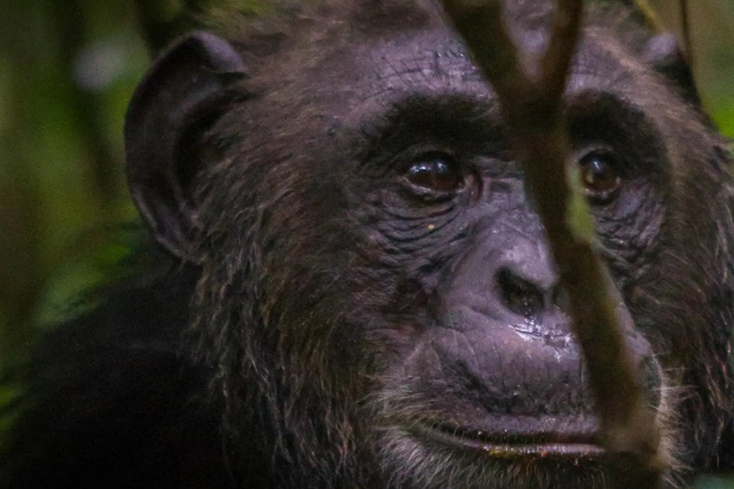 Kibale Forest National Park – Gorilla Tracking Africa