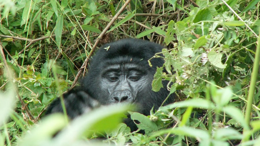 3 Day Uganda Gorilla Tracking Tour