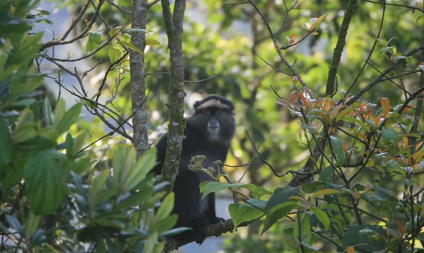 Nyungwe Forest National Park - Chimpanzee Tracking Rwanda