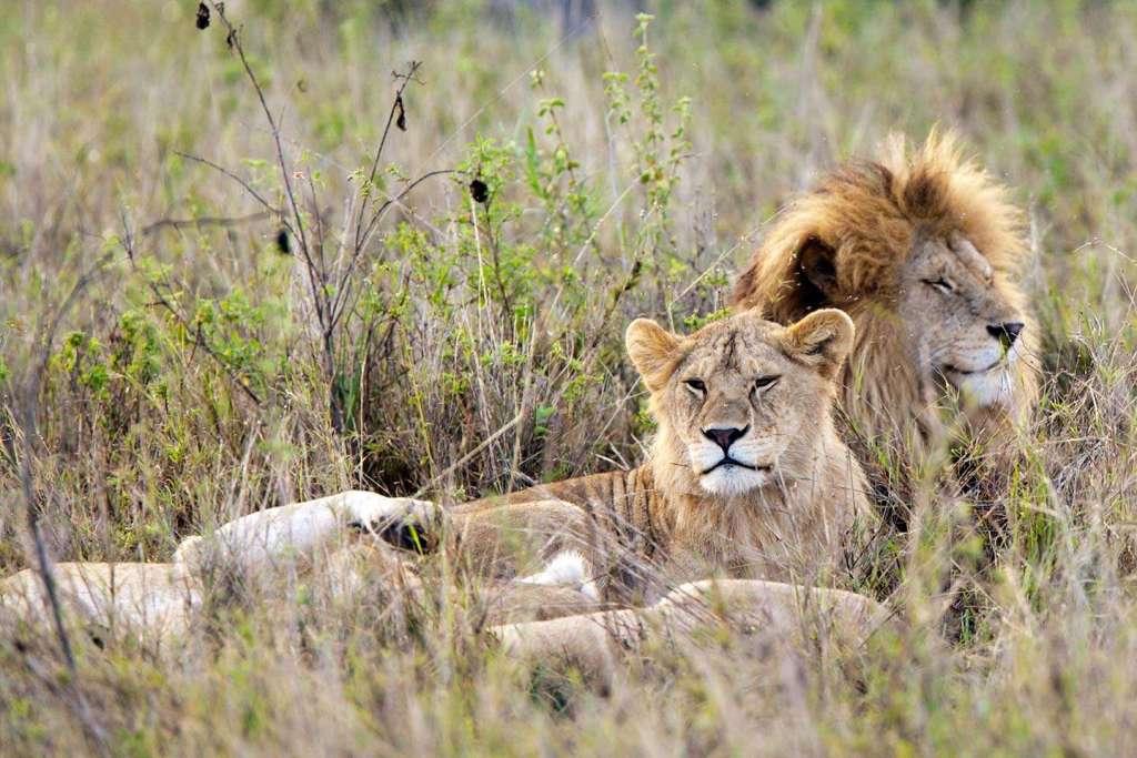 7 Days Serengeti Safari: Follow the Great Migration