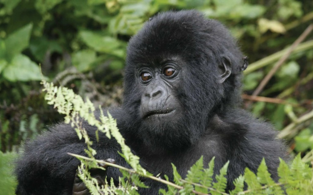Rwanda - Uganda Holiday safari