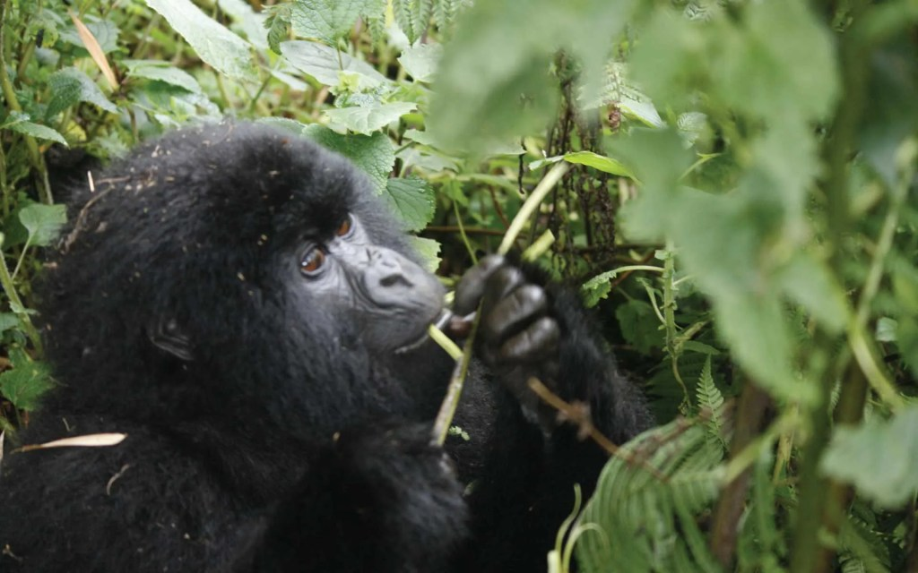 3 Day Rwanda Gorillas Safari Adventure