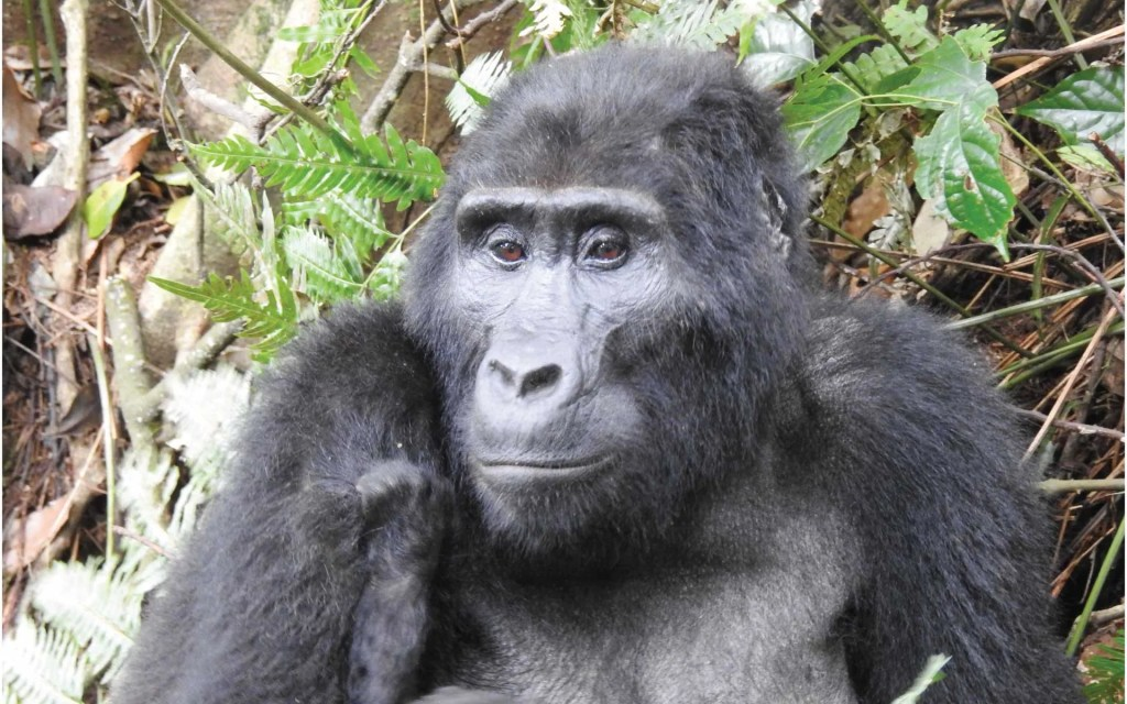 2 Day Mountain Gorilla Trekking Rwanda