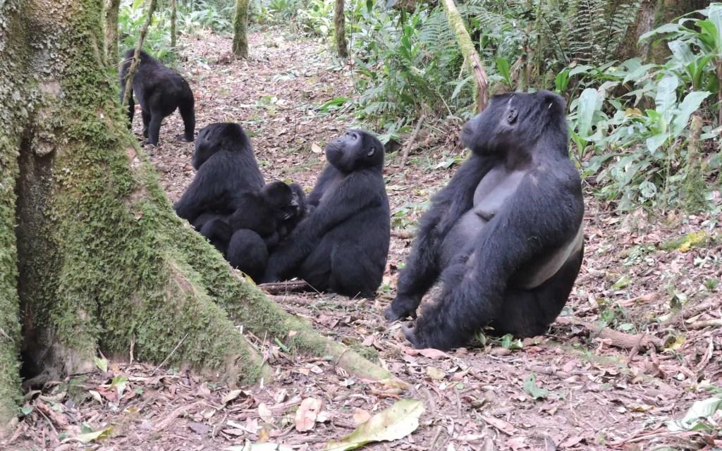 Rwanda Gorilla Tracking Tour