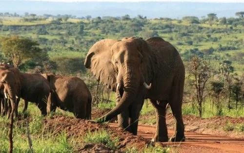 Murchison Falls National PArk elephants big 5