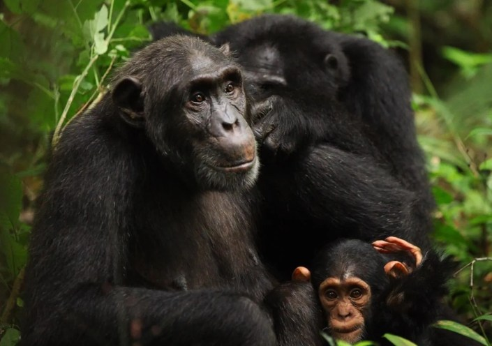 10 reasons Visit Uganda