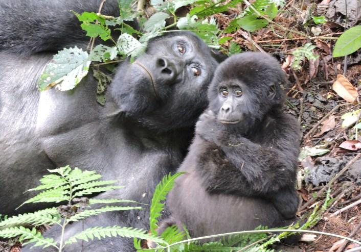 10 Reasons why Visit Uganda