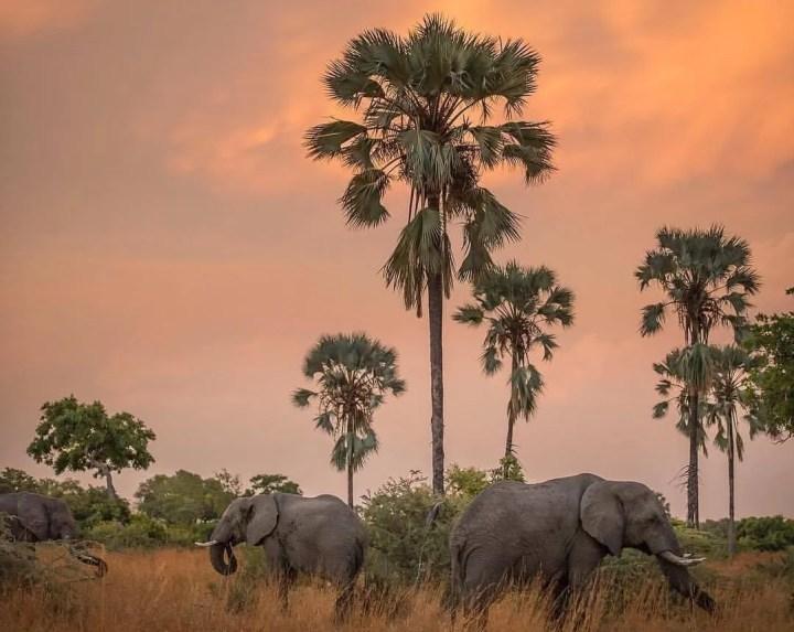 Top 5 Activites to include on Uganda Safari