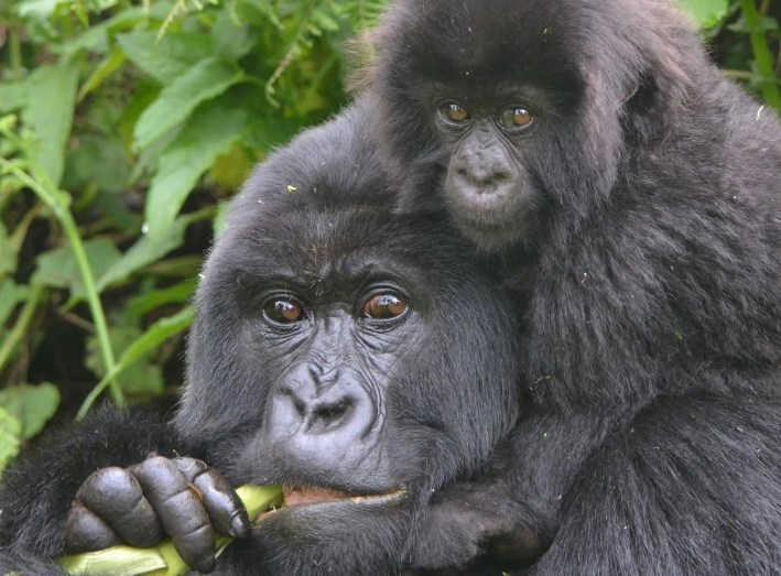 Top 5 Activities to include on Uganda Safari
