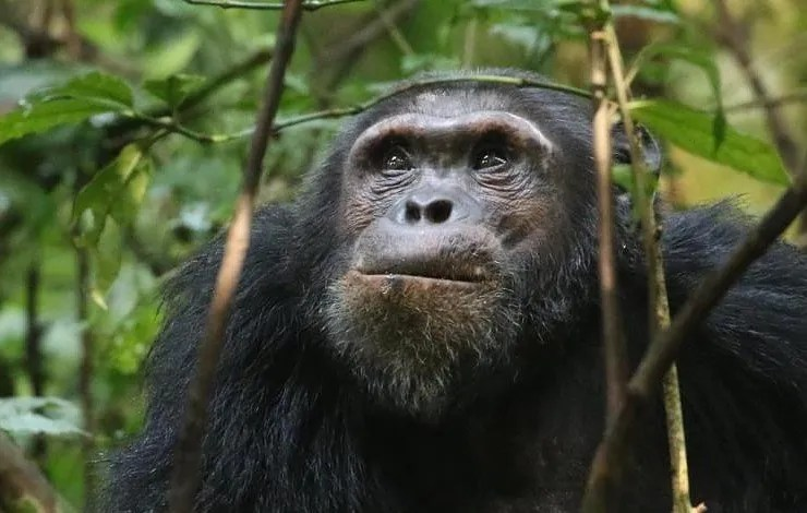 Top things to do & see in Kibale national park