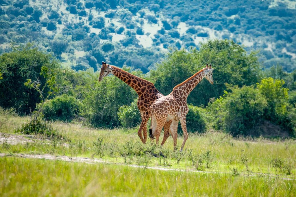 Akagera Wildlife Safari Tour
