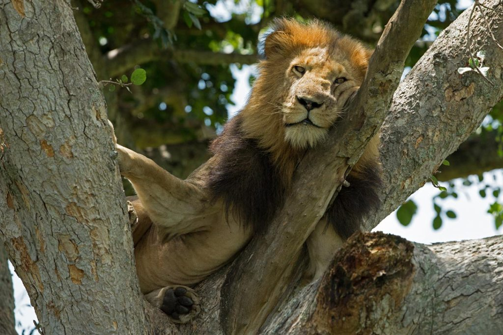 Queen Elizabeth Safari - Queen Elizabeth National Park