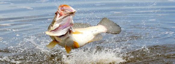 murchison falls fishing tournament