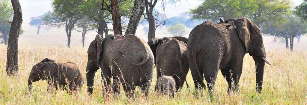 Elephants, Kidepo safari uganda Gorillas and Wildlife Safaris