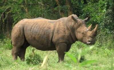 Rhino tracking, Ziwa Sanctuary